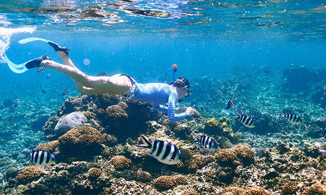 mystery-island-advanced-snorkel-J808-mosaic